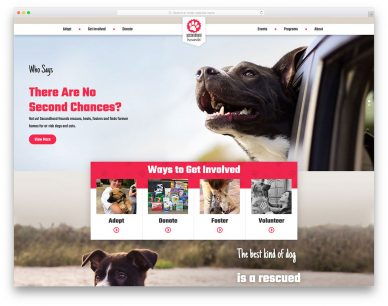 Best Veterinary Websites