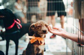 Animal Shelter WordPress Themes