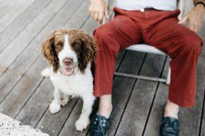 Animals And Pets WordPress Themes