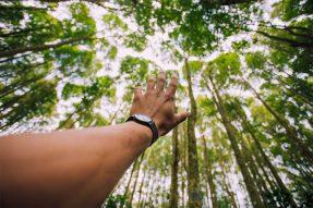 Environmental And Non-Profit Organizations WordPress Themes