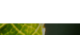 Logo-Header-Menu