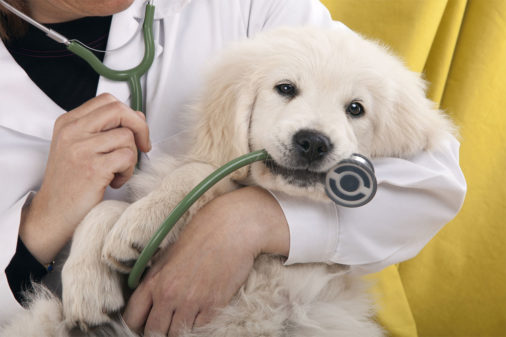 Pet Services And Veterinary WordPress Themes