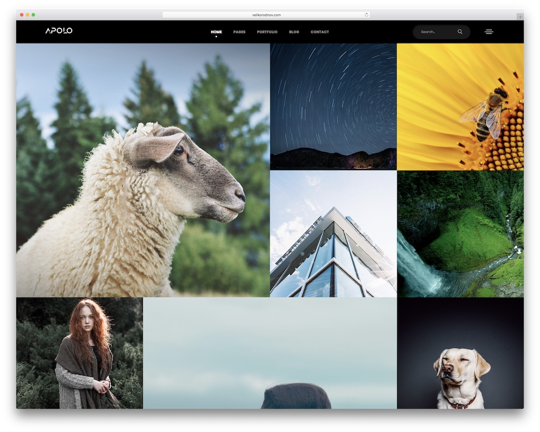 apolo grid website template