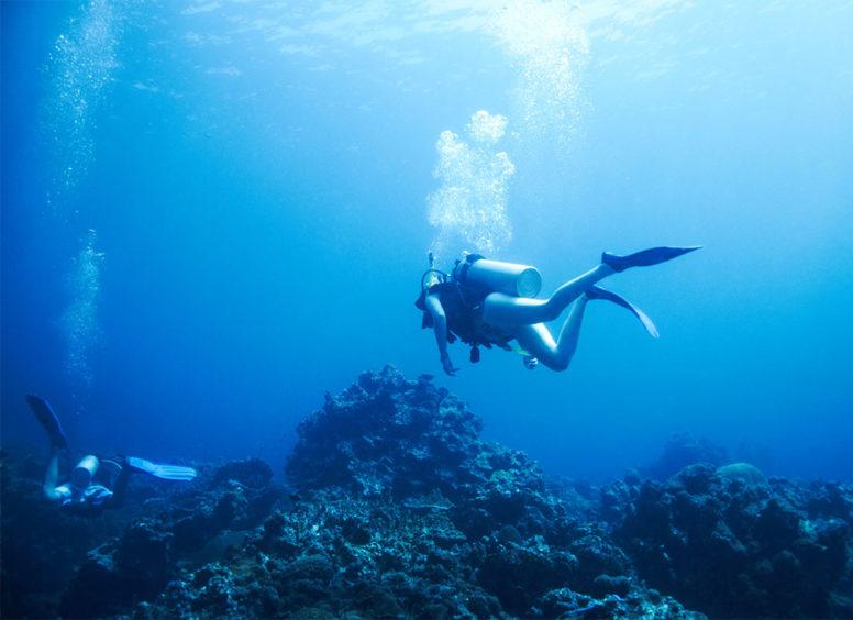 Diving WordPress Theme