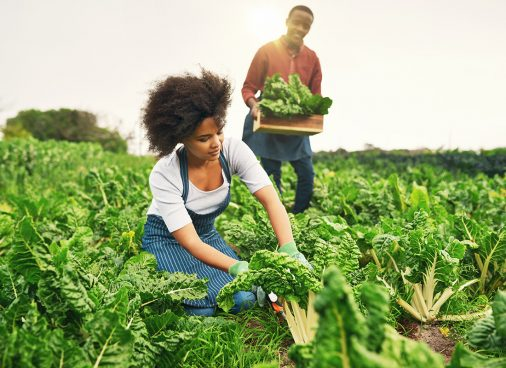 Eco And Organic Farming WordPress Themes