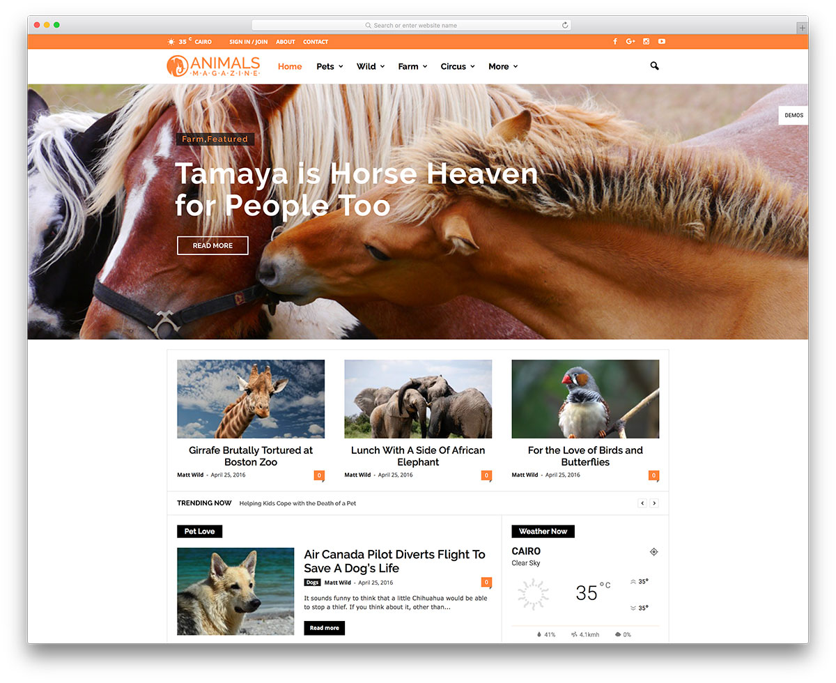 newsmag-animal-magazine-wordpress-website-template