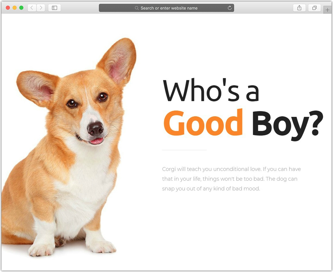 Welsh Corgi | Dog Breeding and Sale WP Theme