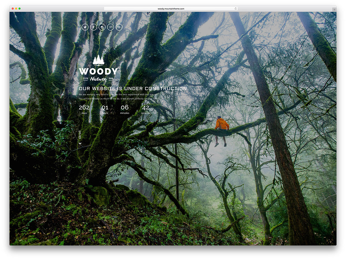 woody-forest-inspired-green-website-template