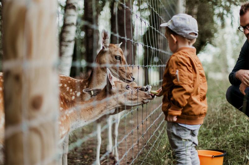 Zoo WordPress Themes